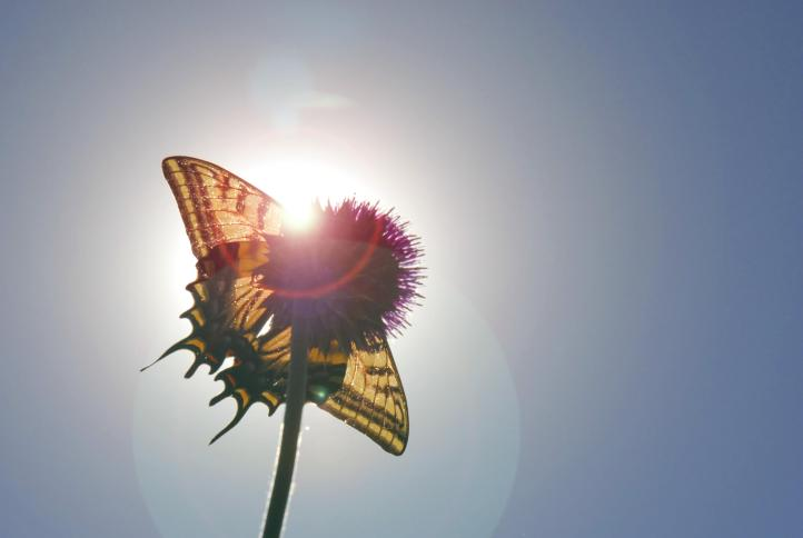 Record April sunshine means butterfly numbers are booming.