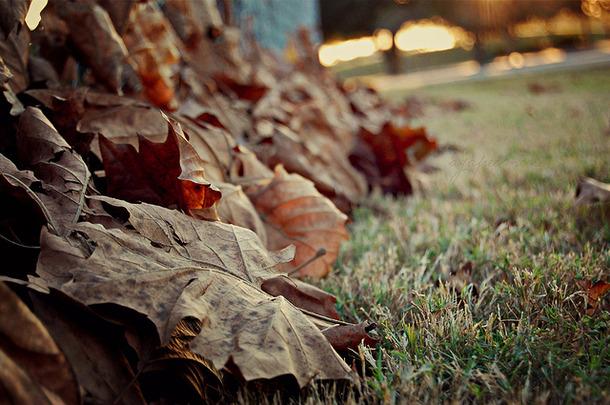 Favim.com-autumn-cold-fall-fence-field-florida-48514