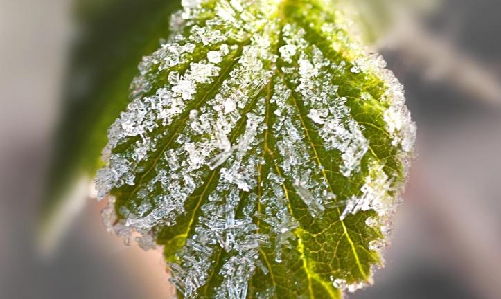 frosty-leaf.jpg