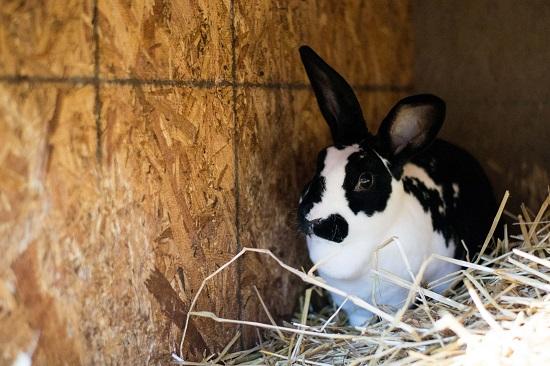 bw-rabbit-use-jpg