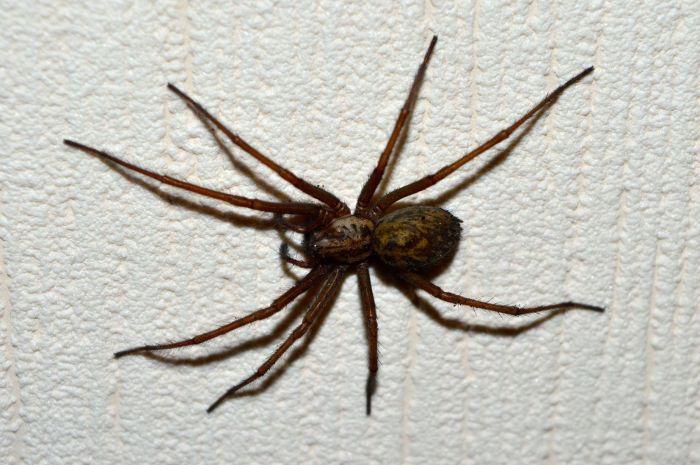 Spider48