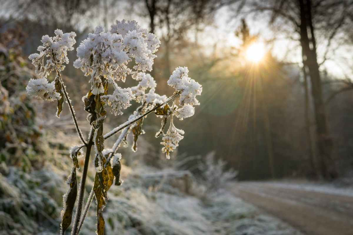 Freezing weekend ahead for Merseyside as the Beast from the east arrives, but there is some good news